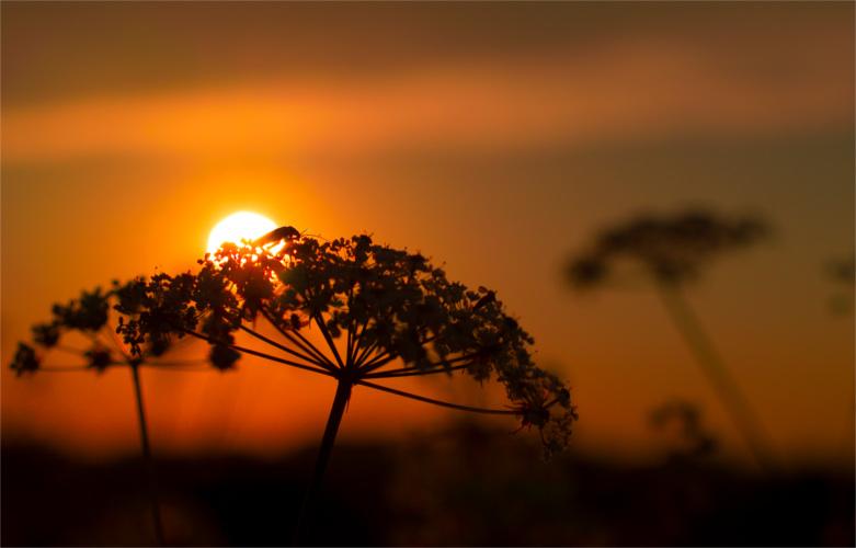 sun_500_781